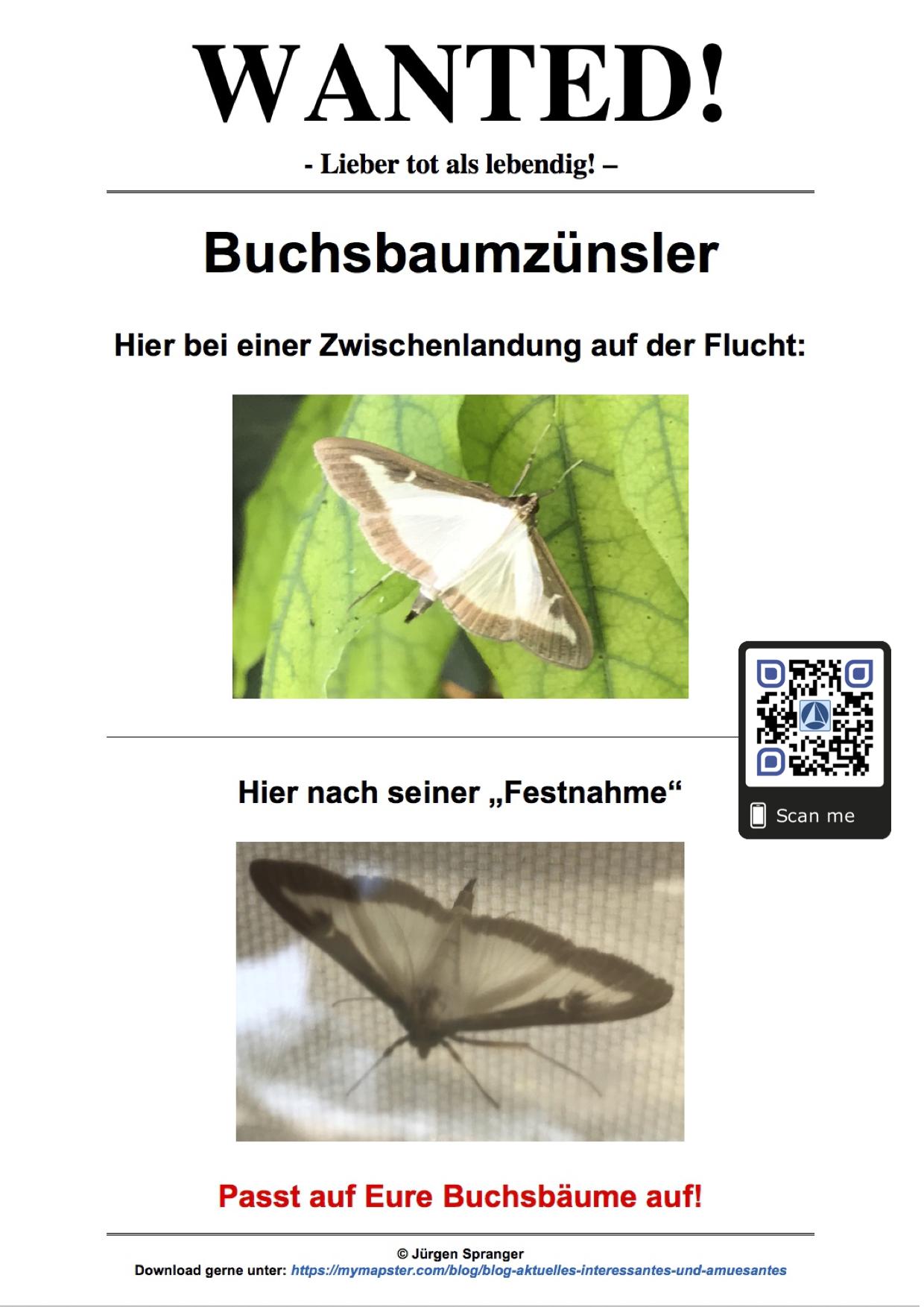 Fahndungsplakat Buchsbaumzünsler (mymapster.com)